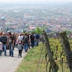Bensheimer Kirchberg Weinlagenwanderung