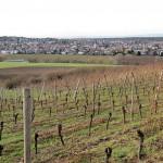 Blick über die Weinberge auf Roßdorf bei Darmstadt